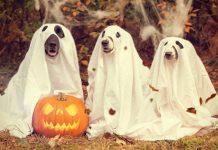 Halloween dog  e