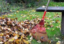 rake leaves  e