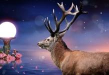 deer rose